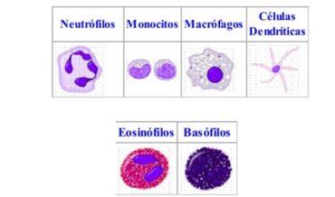 Deficiencia de las Células Fagocíticas