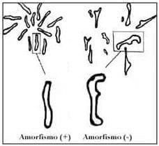 Variedades de patrón pit tipo