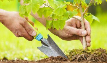 descuentos tributarios por reforestación