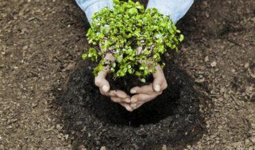 presunción de deducción en plantaciones