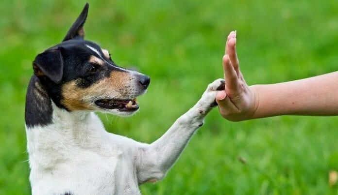 adiestramiento de perros cachorros
