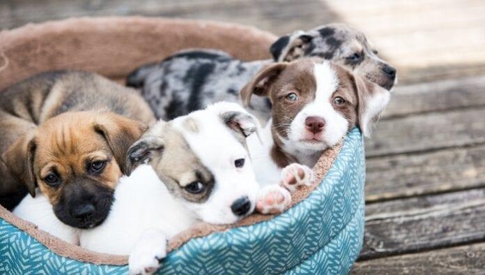 comportamiento cachorros