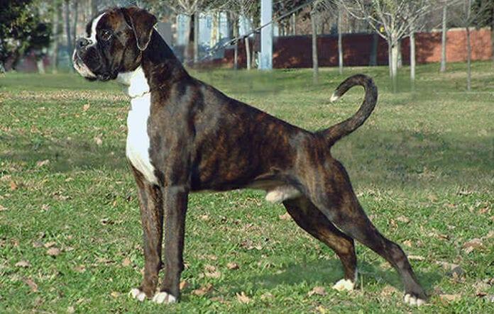 Normas para amos de perros