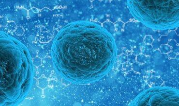 Carcinoma Oral Trasplantable para Bioensayos, Conclusiones