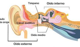 Oído Externo, Oído Interno y Oído Medio