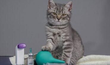 Enfermedades comunes de los gatos