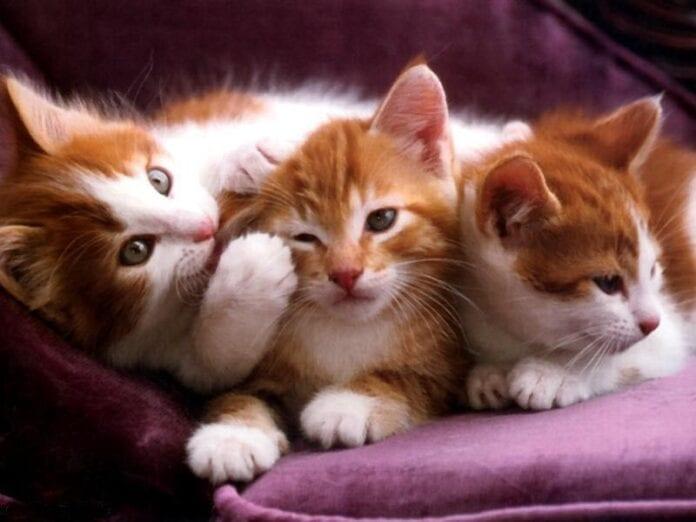 cuidar a tu gato