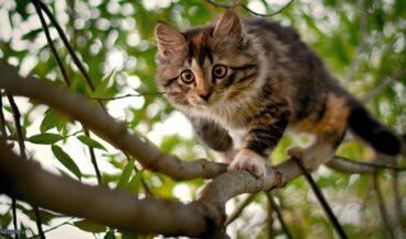 Gato en los árboles - por qué se suben a los árboles