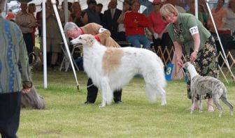 Reclamento Exposiciones Caninas