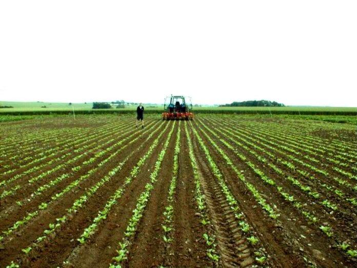 Agro - Sector Agroindustrial en Colombia - Economía