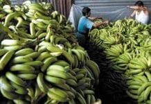 Análisis-de-los-Sectores-de-la-Economía-Sector-Agrícola