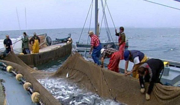 Productos-pesqueros-colombianos