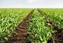 Protección a la Producción Agropecuaria Nacional