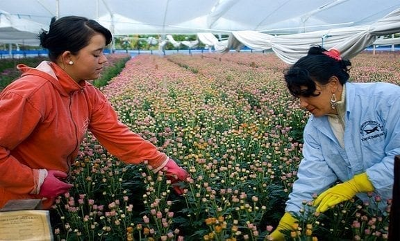agronomia-floricultura