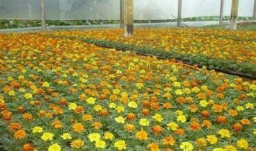 Floricultura-flores