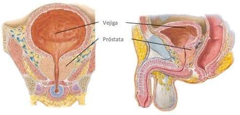 ¿omega 3 ayuda a reducir la próstata agrandada letra