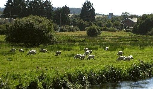 Pasto Combatir Cambio Climático