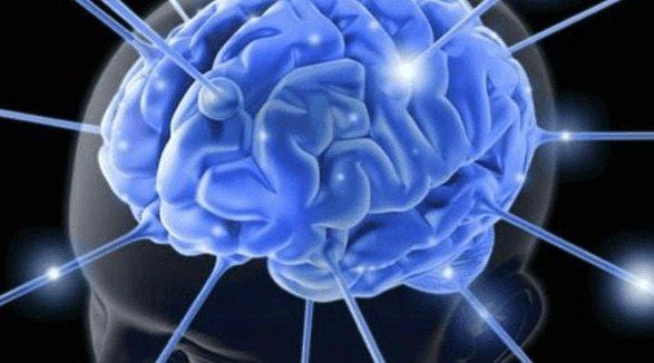 Descubren una Proteína clave en la formación de la Memoria