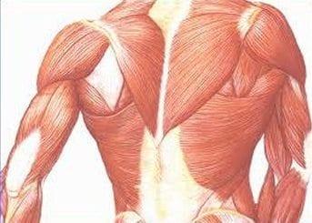 El Síndrome de Lambert-Eaton: Fisiopatogenia de la Unidad Neuromuscular