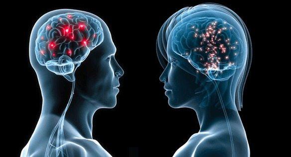 Estrógeno podría potenciar el Cerebro