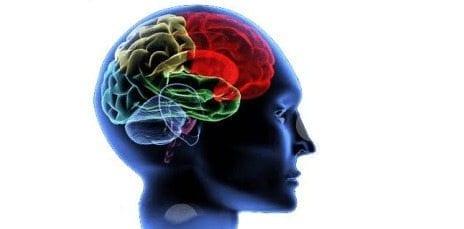 """El Cerebro puede tener un circuito aparte para """"soñar despierto"""""""