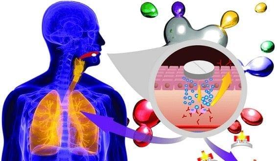 Mecanismo que regula la respuesta del sistema Inmune