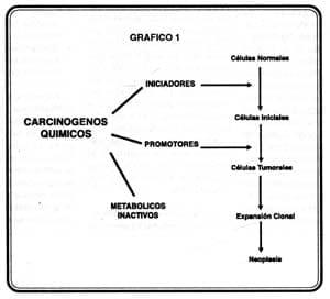 rfco-volumen-57-grafico5