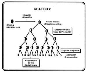rfco-volumen-57-grafico6