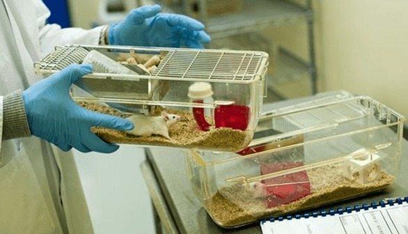 Terapia Génica en ratones