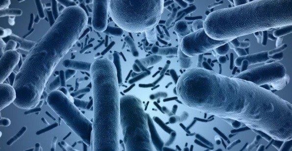 Trasplante de Heces Aliviaría la Diarrea Grave