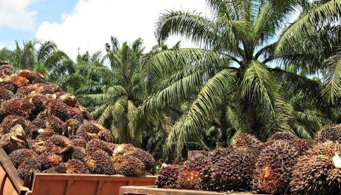 CONPES palmero