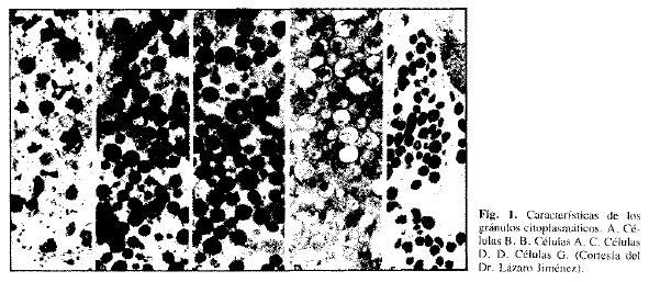 Fig. 1. Caracteristicas de los granulos citoplasmaticos