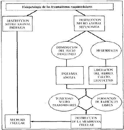 Fisioterapia de los traumatismos Raquimedulares