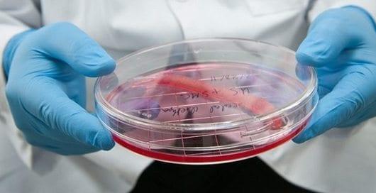Desarrollan Vejiga de remplazo de las Células