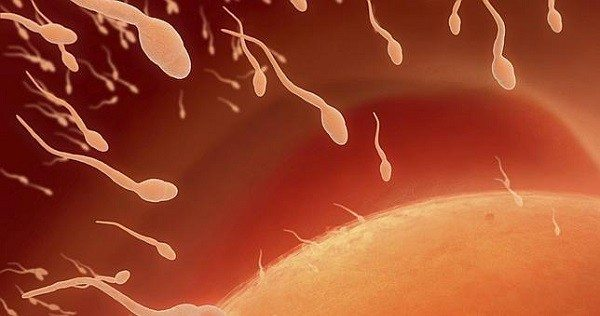 Aborto y la Fertilidad