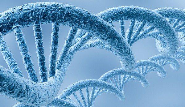 Citogenética y Plaguicidas