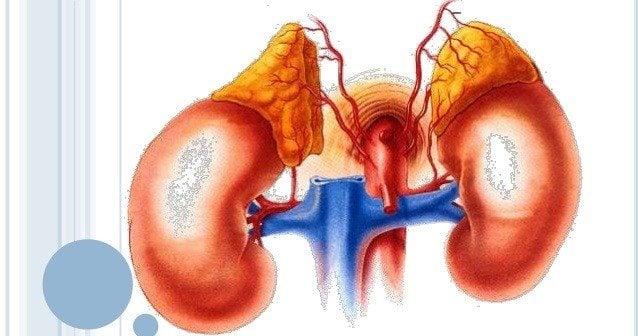 Corteza Suprerrenal