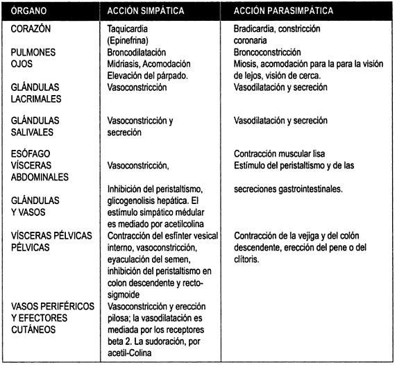Efectos neurovegetativos - Acción simpática y parasimpática
