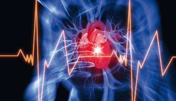 Envejece el Sistema Cardiovascular