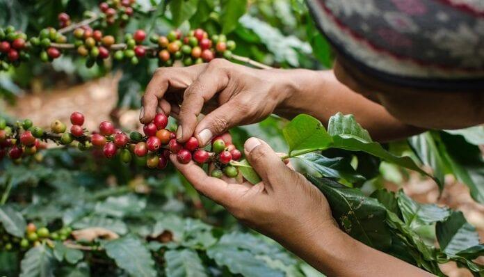 familias productoras de café
