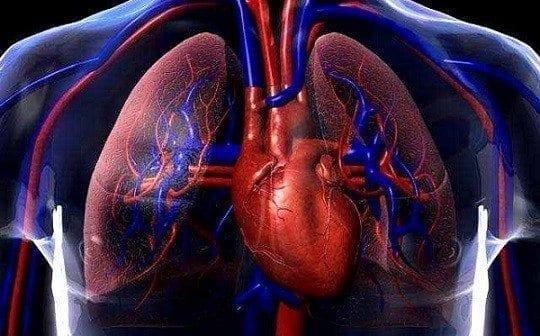 Fisiología Circulatoria
