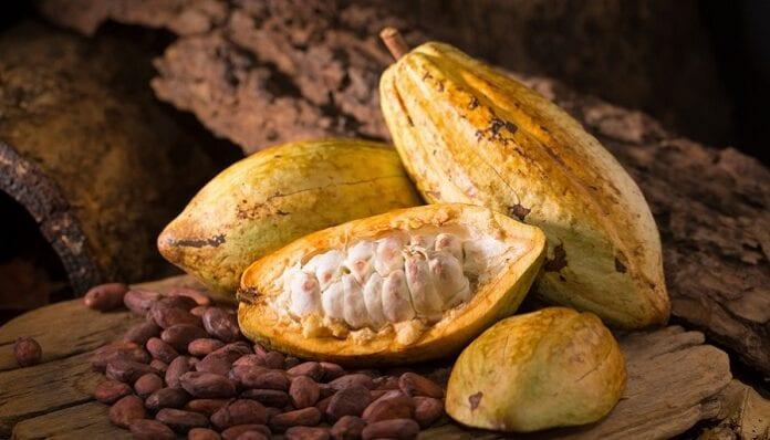 identidad genética de las plantas de cacao
