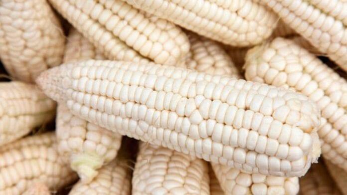 importaciones de maíz blanco