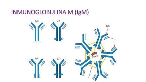 Inmunoglobulina M en Dengue