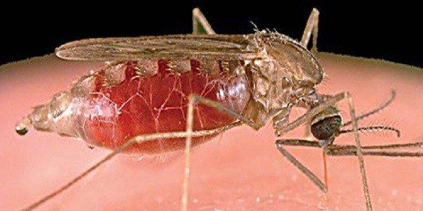 Malaria en Colombia