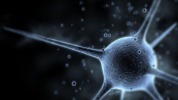 Neuronas con un Chip de Computador