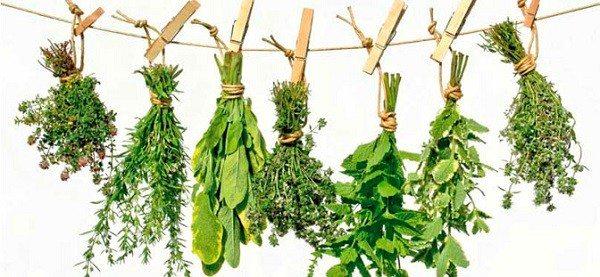 Progestágenos de las Plantas