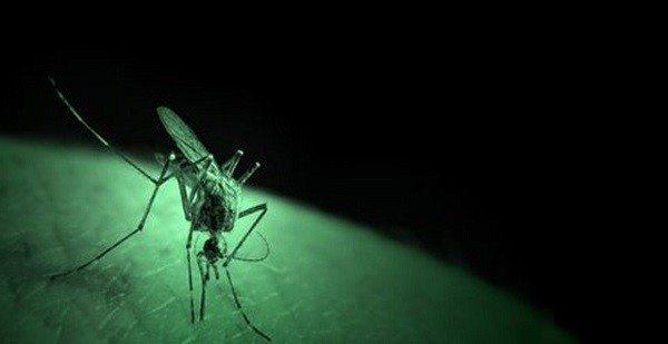 Prueba de Eficacia en Malaria