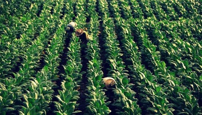 sectores agropecuarios exportadores