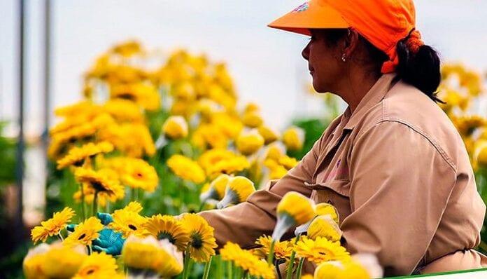 sectores exportadores de flores y banano